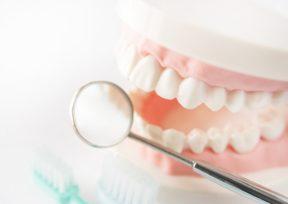 歯の模型とルーペ、歯ブラシ