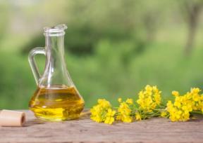 菜の花と容器に入れられた菜種油
