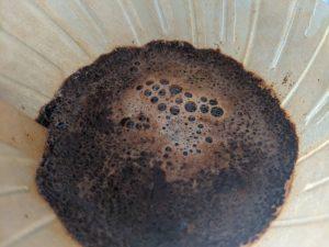 冷凍1週間経過したコーヒー豆